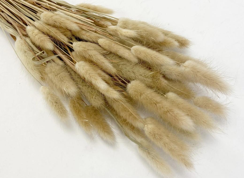 Bunny Tails 50pk Natural
